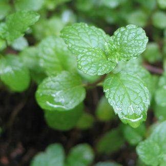 Zöldmenta illóolaj