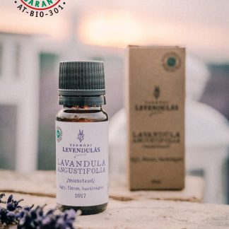 Munstead – Lavandula angustifolia – BIO